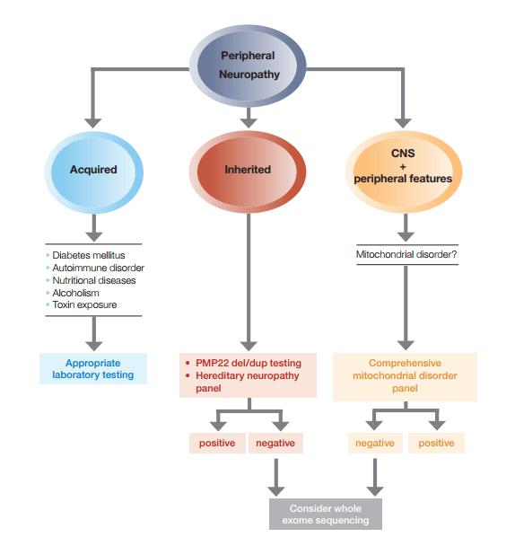 gene testing HNPP hereditary neuropathy