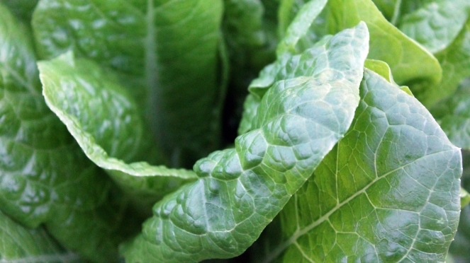 Spinach magnesium intake for HNPP hereditary neuropathy