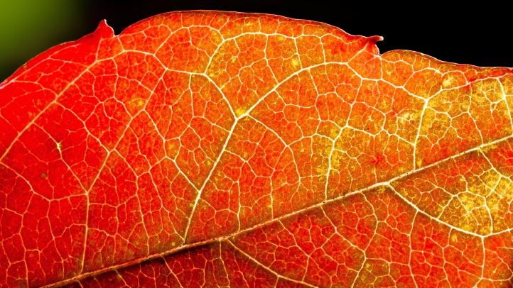 tree-plant-sun-leaf-flower-pattern-927384-pxhere-com.jpg